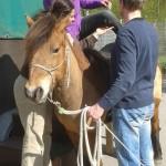 Perfektes Timing zwischen Pferd, Therapeut und Führer garantieren ein sicheres Aufsitzen.